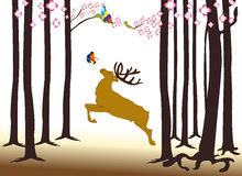 Moose in the forest Stock Image