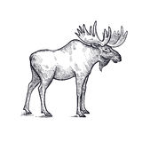Moose forest animals illustration. Royalty Free Stock Photography