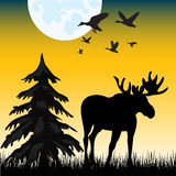 Moose on glade Royalty Free Stock Photo