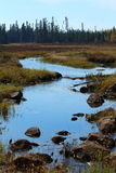 The moose habitat: marshes in the boreal forest of Quebec Royalty Free Stock Images