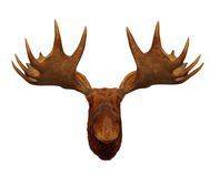 Moose head antler Royalty Free Stock Image