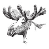 Moose head in graphic style Stock Image