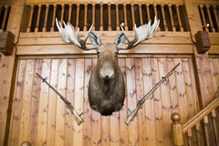 Moose head and guns on wall Royalty Free Stock Photography