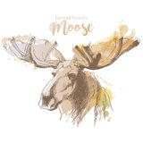 Moose head with huge antlers. Sketch vector illustration isolated on white background. Christmas animal vector illustration