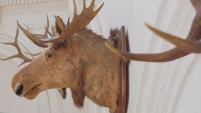 The Moose Head Trophy