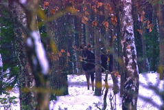 Moose hiding in the bushes, Lithuania Royalty Free Stock Image