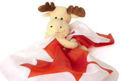 Moose holding a Canadian flag stock image