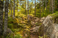 Moose Horn Trail Path. (Fundy National Park, New Brunswick, Canada royalty free stock images