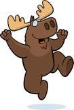 Moose Jumping Stock Image
