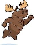 Moose Jumping Royalty Free Stock Photo