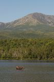 Moose at Katahdin Stock Photo