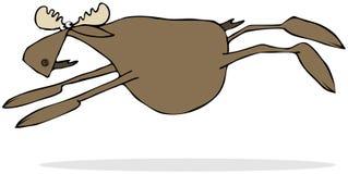 Moose leaping through the air Stock Photos