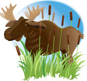 Moose in a Marsh Stock Photo