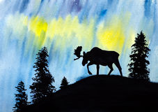 Moose and northern lights Stock Images