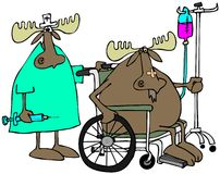 Moose patient & nurse Royalty Free Stock Photos