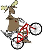 Moose popping a wheelie on a bicycle Royalty Free Stock Image