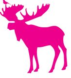moose ptaka Fotografia Royalty Free
