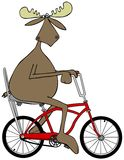 Moose riding a bicycle Stock Image
