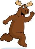 Moose Running Stock Photos