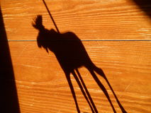 Moose shadow. Wood texture background Royalty Free Stock Photos