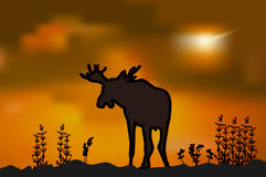 Moose silhouette at sunset Royalty Free Stock Photo