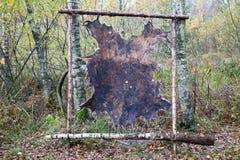 Moose skin Stock Photo