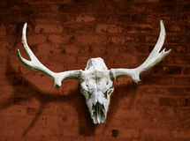 Moose skull with horns against the brick wall Stock Photo