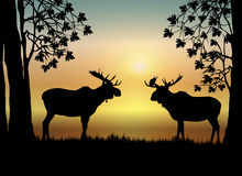 Moose at Sunrise. Illustration of two moose in forest at sunrise Royalty Free Stock Photo