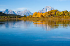 Moose swims in reflections of Grand tetons lake Royalty Free Stock Image