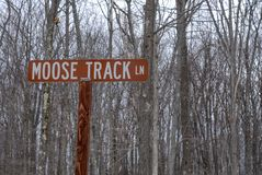 Moose Track Lane in a forest royalty free stock images