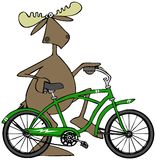 Moose walking his bicycle Stock Image