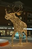 A moose wanders across the square Stock Image