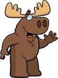 Moose Waving Stock Images