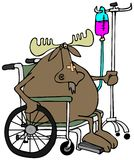 Moose in a wheelchair. This illustration depicts a moose sitting in a wheelchair with an IV stand in the back Stock Photo
