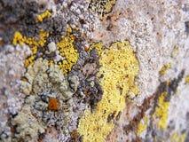 Moosige alte Felsen, moosige Felsmalerei der Nordseite Lizenzfreies Stockbild