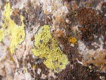Moosige alte Felsen, moosige Felsmalerei der Nordseite Lizenzfreies Stockfoto