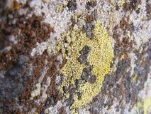 Moosige alte Felsen, moosige Felsmalerei der Nordseite Stockfoto