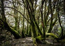 Moosige Bäume Magischer Wald Stockfotos