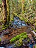 Moosige Bäume von Squamish Lizenzfreie Stockbilder