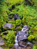 Moosige Felsen entlang Nebenfluss. Stockfoto
