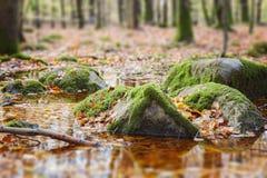 Moosige Felsen im Sumpf Lizenzfreie Stockbilder