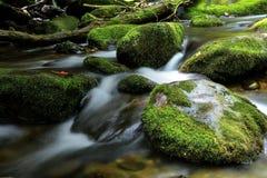 Moosige Flusssteine des Nationalparks Great Smoky Mountains lizenzfreie stockbilder