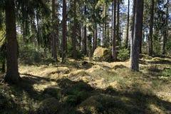 Moosige Steine im tiefen Wald Stockbilder