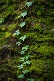 Moosige Steine tief im Wald lizenzfreie stockfotos