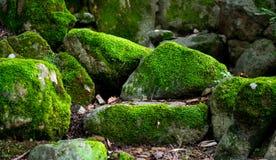 Moosige Steine tief im Wald stockfotos