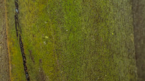 Moosige Täfelungsoberfläche Lizenzfreie Stockbilder