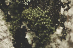 Moosige und nasse, dunkle Beschaffenheit Stockfotos