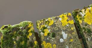 Moosige und verwitterte Planken einer alten Brücke über Wasser Stockbild