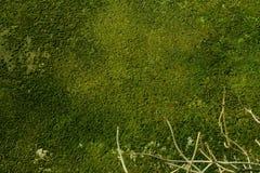 Moosige Wand stockfoto