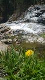 Moosige Wasserfälle mit Löwenzahn lizenzfreie stockbilder